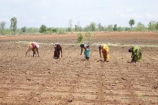 Bio Farmerinnen bringen Saatgut in den Boden (002).jpg