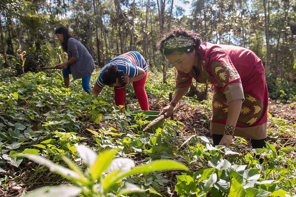 Foto reprodução TenondePora.org.br