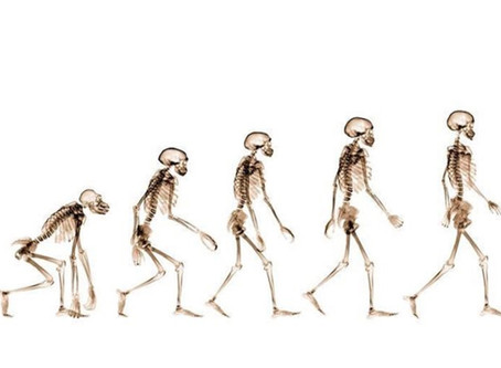 Evolution - move your pelvis!