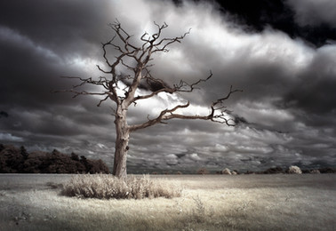tree-higher.jpg