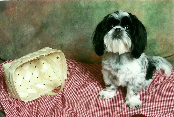 Cody, posing for his portrait!