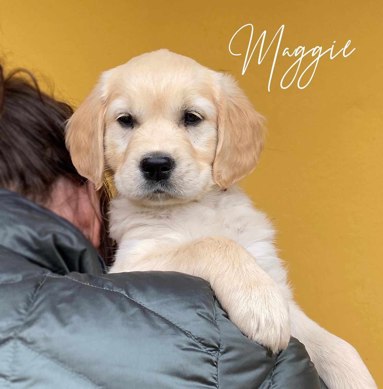 MAGGIE_8uger