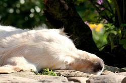 SIIRUP sover…