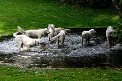 Kennel NEWLUCK hundesvømning