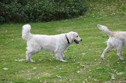 kennel newluck hundefestival
