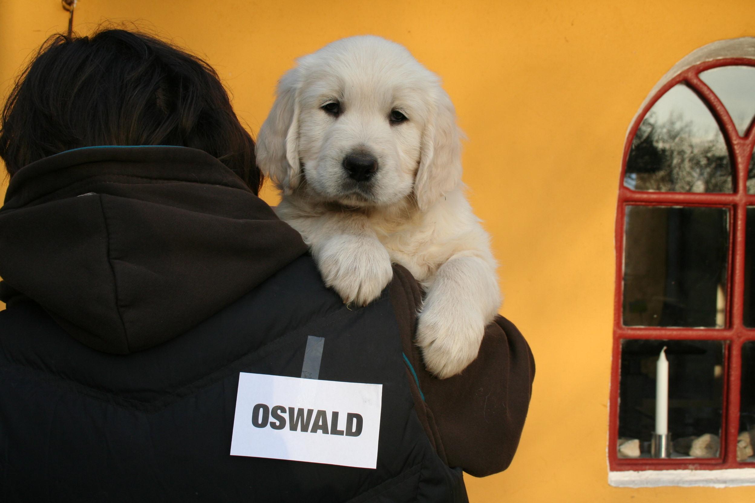 OSWALD (Kermit)