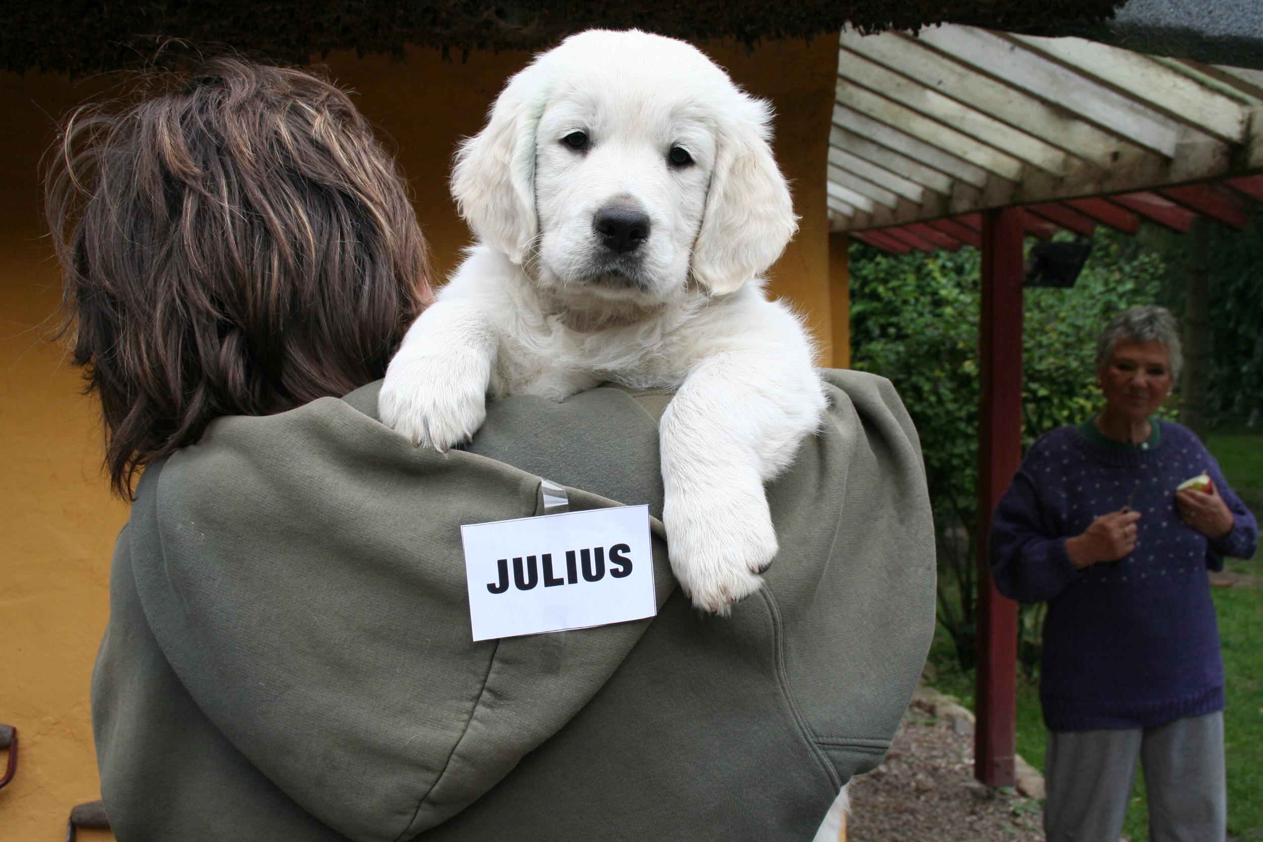 JULIUS (julemanden)