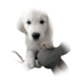 Kennel newluck hundelegetøj