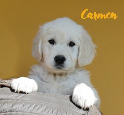 NEWLUCK Carmen by Bizet 8 uger