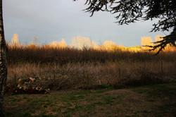 NEWLUCK golden retriever hvalpe