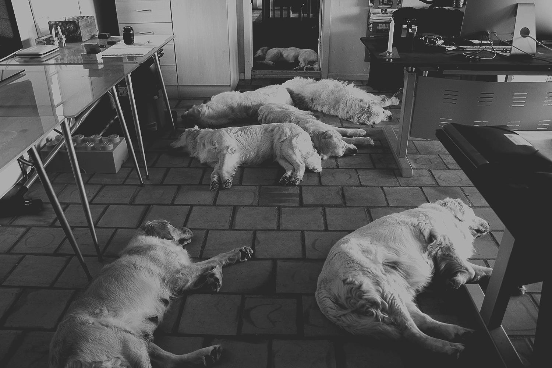 Kennel NEWLUCK hunde på job