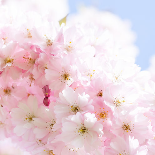 The Magic of Botanicals-4951.jpg