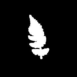 White botanical fern Canva copy.png