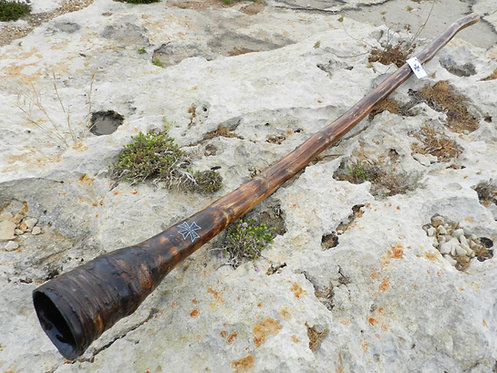 Agave  Didgeridoo 063