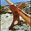 Thumbnail: Wooden Didgeridoo Stand           (Hands Free!)