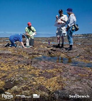 Sea Search image.JPG