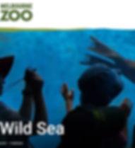 Wild%2520Sea%2520Image_edited_edited.jpg