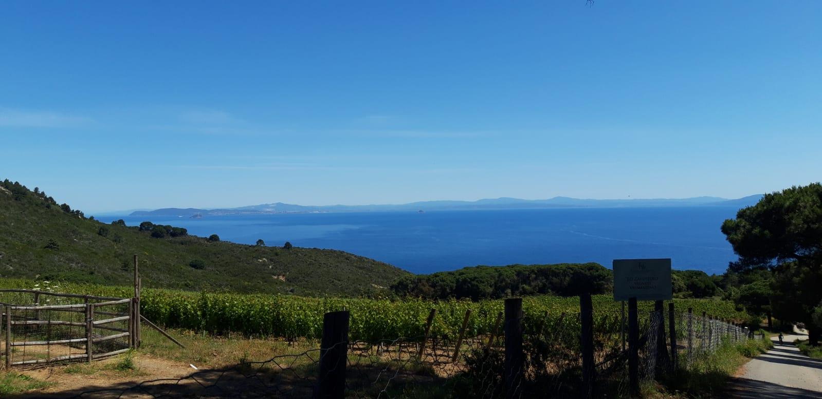 Costa dei Gabbiani Vigne Vermentino delle Ripalte