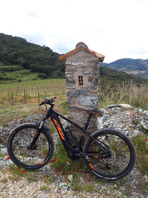 Tour di Rio Marina in E Bike Noleggio KTM Macina 273 Monte Fico