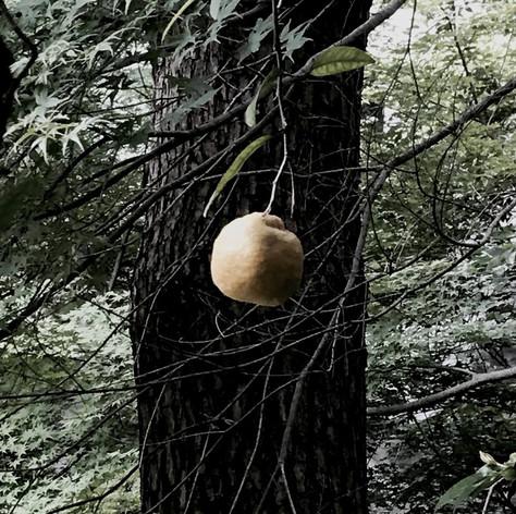 三宝柑と小枝