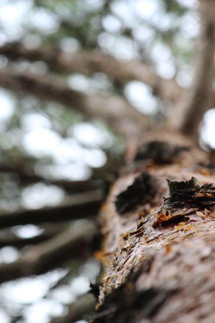樹木の意識