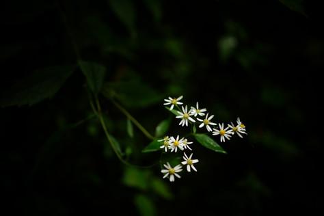 Flower is Flower