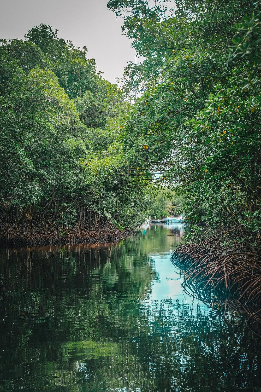 Balade en bateau dans la mangrove - Le Mantou