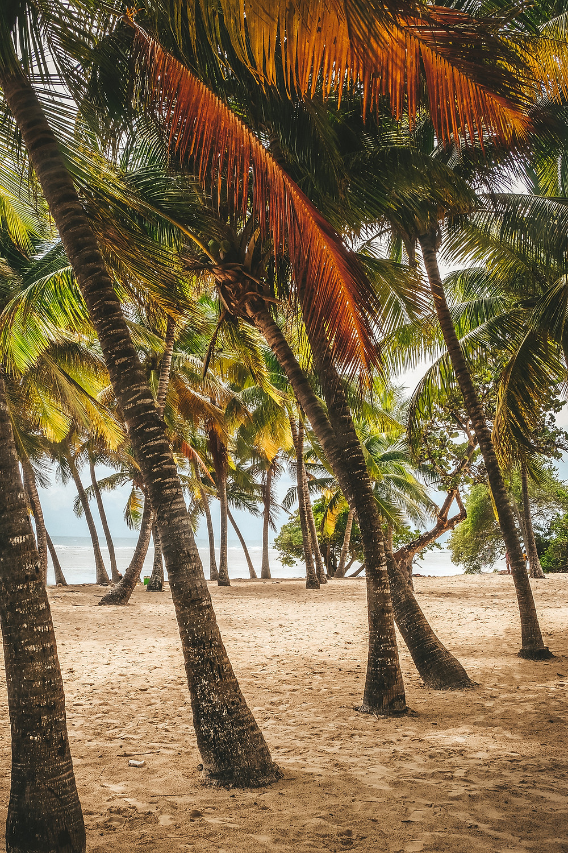 Plage de Bois Jolan Guadeloupe