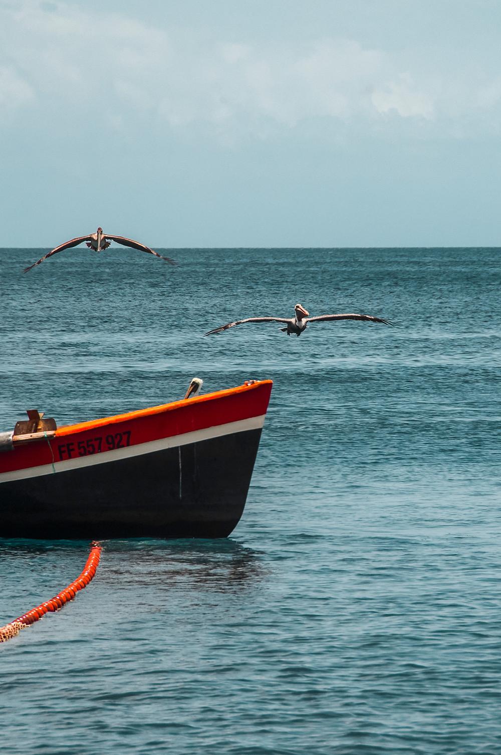 tirer la senne Bellefontaine Martinique