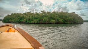 Balade en bateau à la découverte de la mangrove