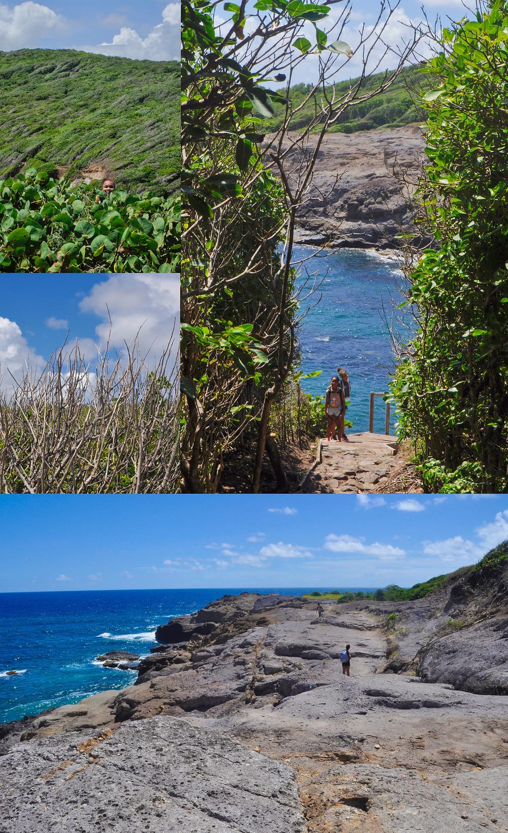 Presqu'île Caravelle Tartane Martinique randonnée
