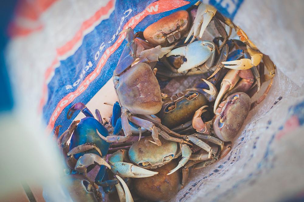 Pêche aux crabes de terre - Martinique - Matoutou de crabes