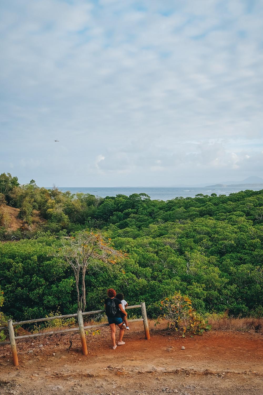 Balade mangrove Caravelle Martinique