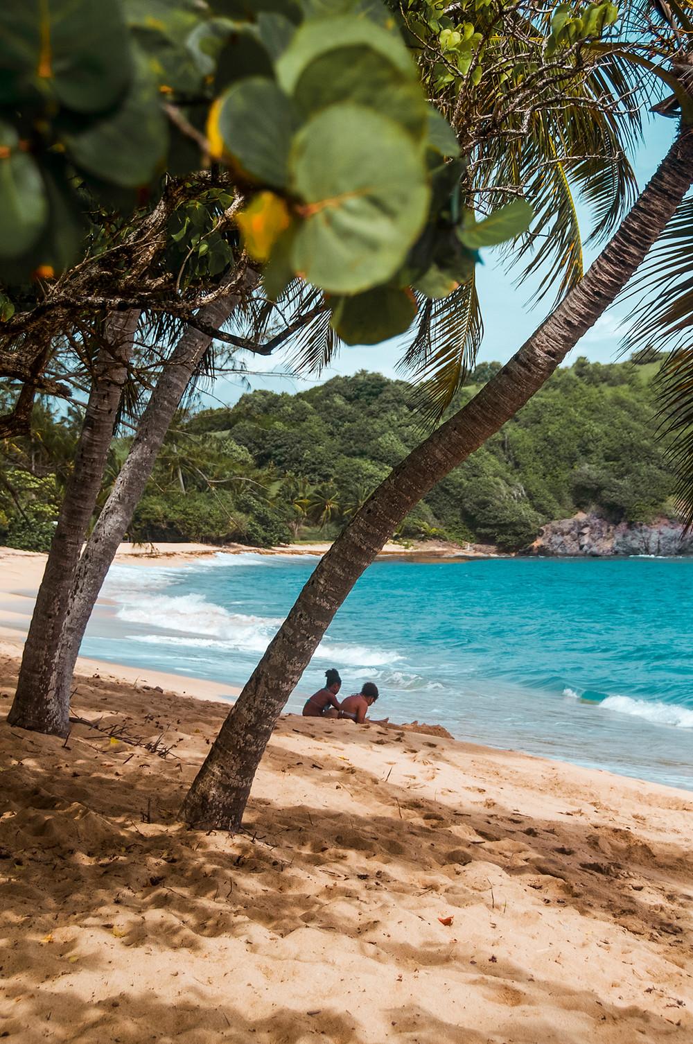 Anse l'Etang Tartane Martinique