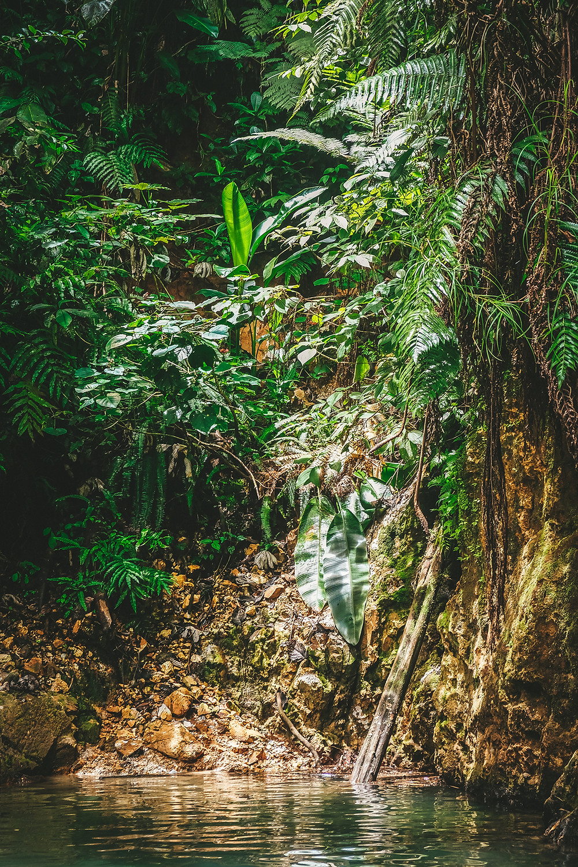 Trace des Jésuites - Martinique