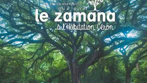 L'Habitation Céron, rencontre avec le plus bel arbre de France !
