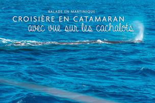 Croisière en catamaran avec vue sur les cachalots
