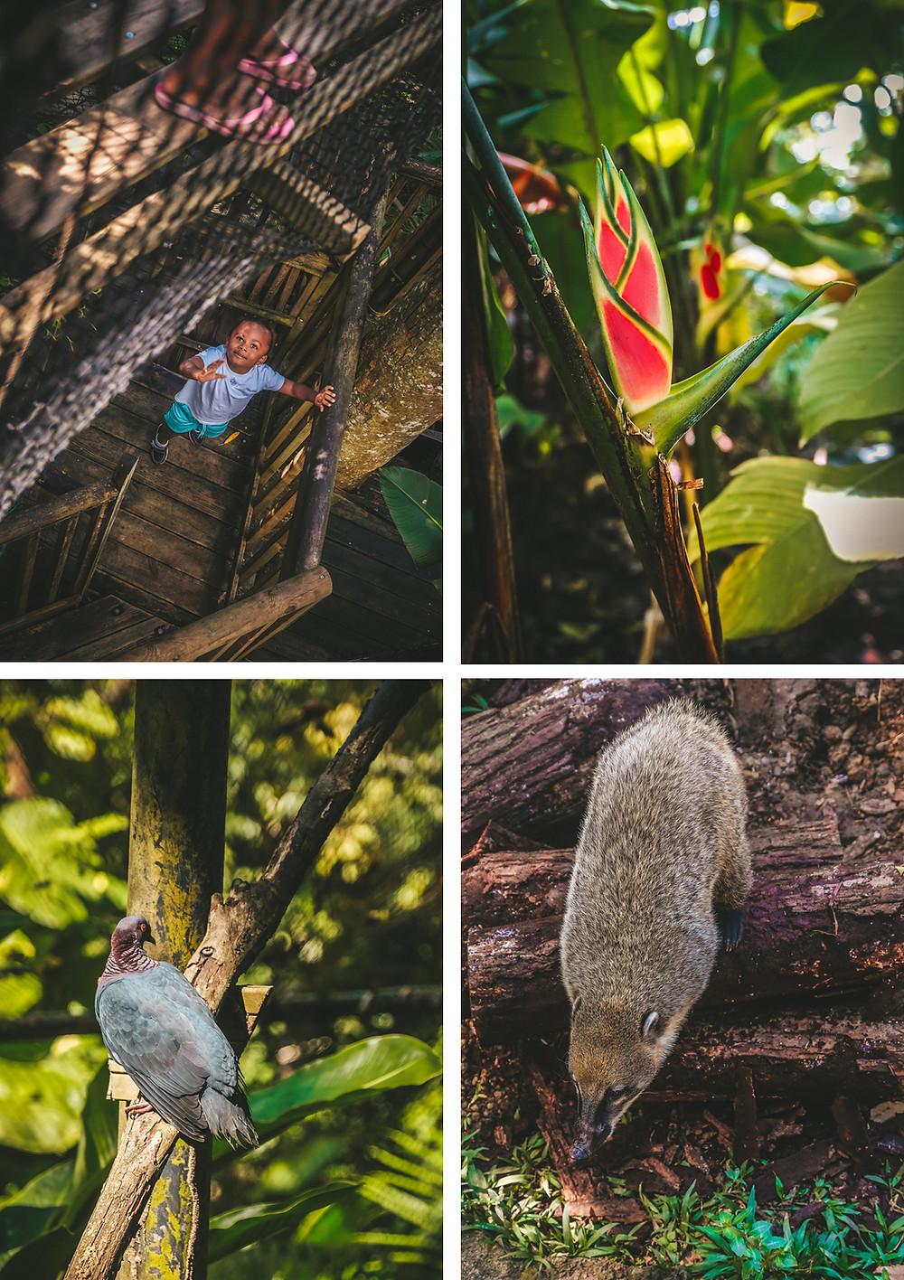 Parc des Mamelles - Zoo Guadeloupe