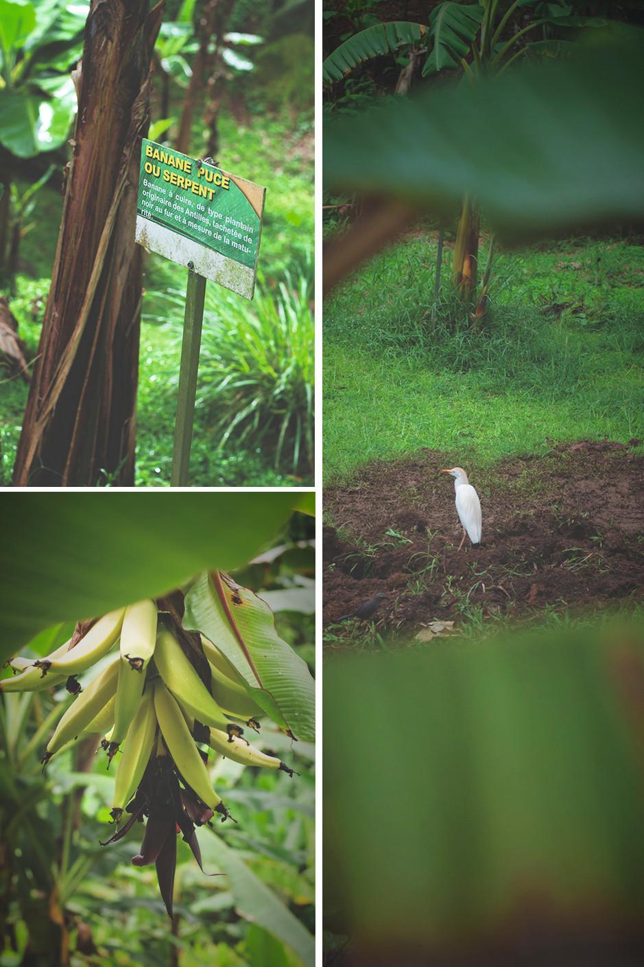 Visite du Musée de la Banane à Sainte-Marie. Martinique
