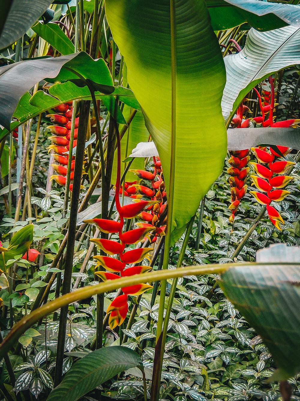Jardin de Balata - Martinique