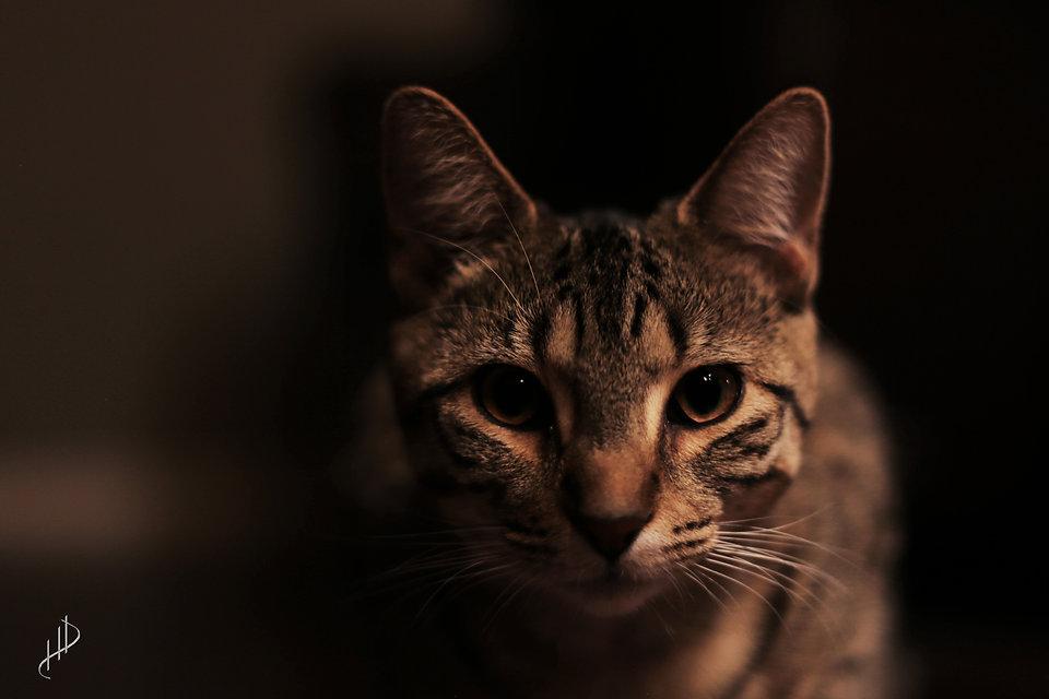 Winter the Cat 2.jpg