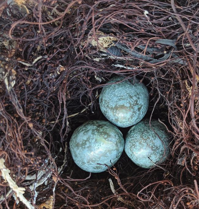 Seaweed nest