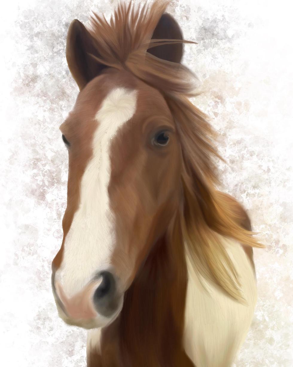 Horse Illustration.jpeg