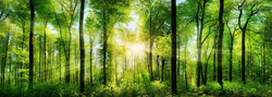 woodland scene - 35