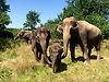 elephant 18 (2).jpg