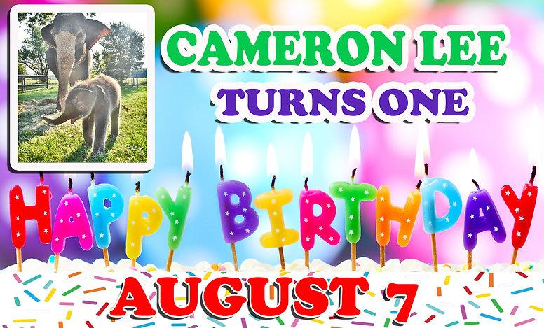 cameron birthday banner.jpg