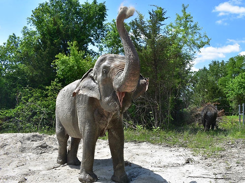 Adopt An Elephant (Herd Package)