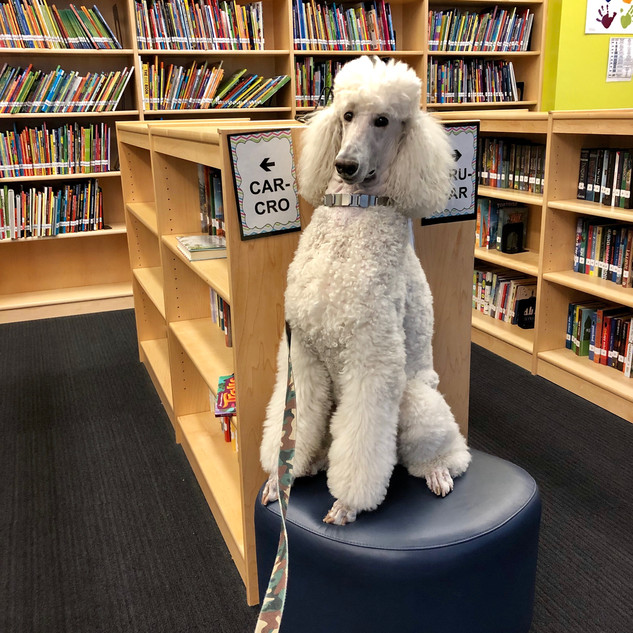 The New Librarian
