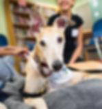 Dogist Tennessee_edited.jpg