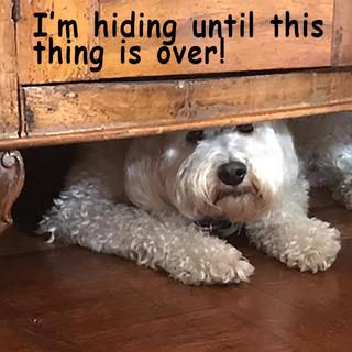 Buster hiding.jpg